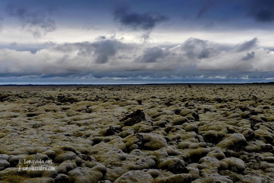 Les roques de lava cobertes de molsa ens acompanyen bona part de les rutes