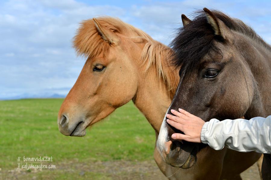 Continuem trobant-nos els superamigables cavalls