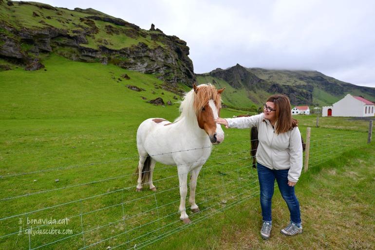 Fent-nos amics dels cavalls