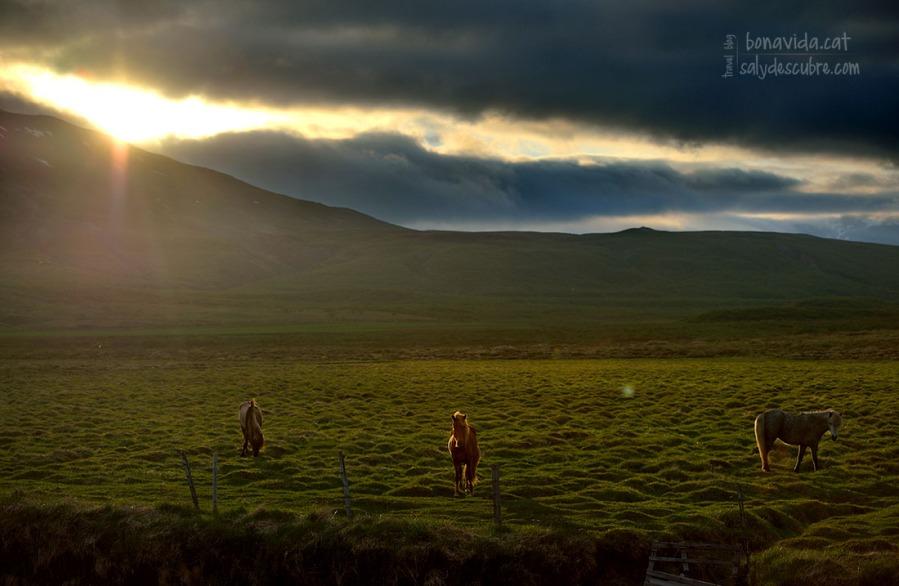 islandia cavalls sunset