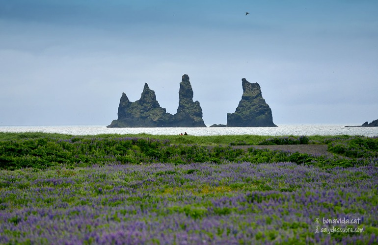 Les característiques roques de la platja de Vík