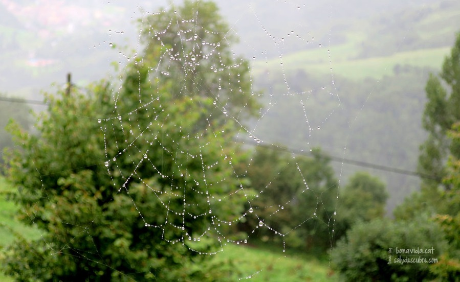 Fins i tot les aranyes aguantes estoiques la plugeta que ens cau...