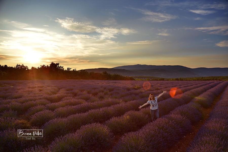 france provence lavanda sunset cris