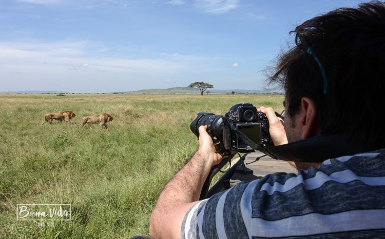tanzania mane foto lleons