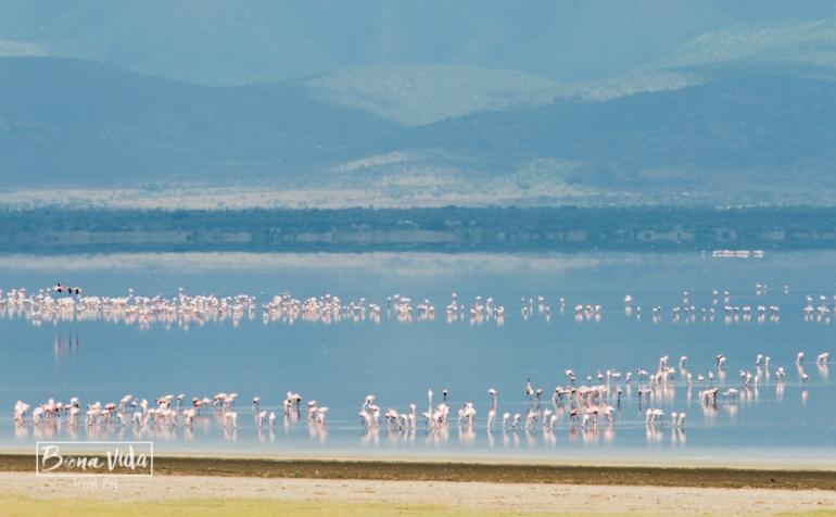 tanzania minyana flamingos