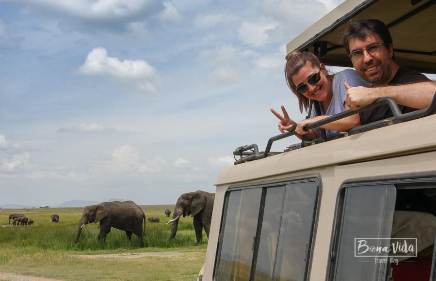 tanzania serengeti nosaltres elefants