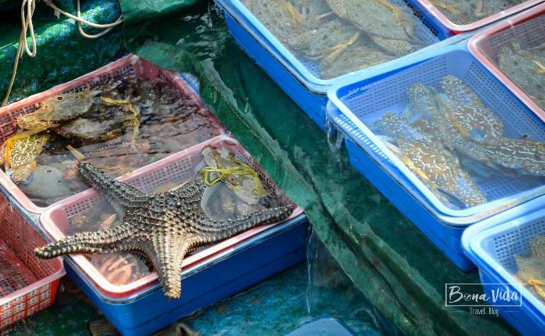 hongkong_mercat_saikun-4