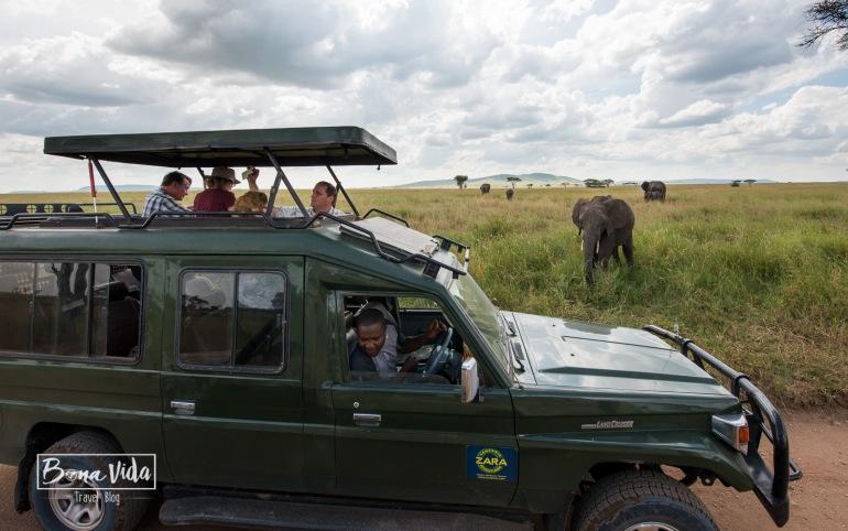 tanzania safari 4x4 elefant-1