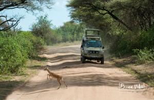 tanzania safari impala cotxe