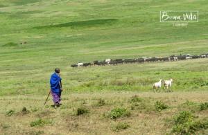 tanzania safari masai pastor