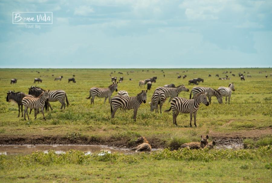 tanzania safari serengeti fauna-1