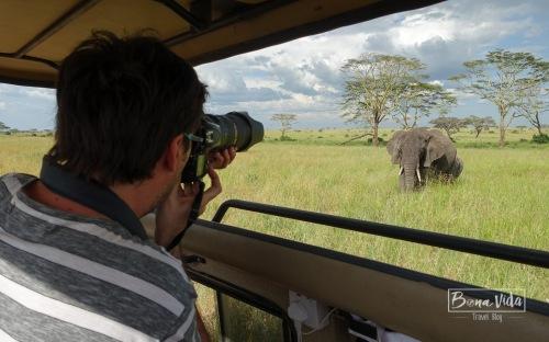 tanzania safari serengeti mane elefants-1