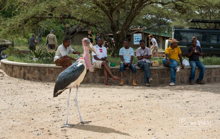 tanzania safari serengeti picnic-2
