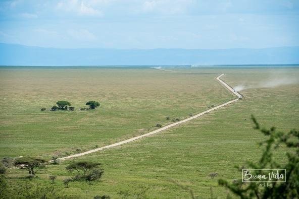 tanzania safari serengeti sabana-1