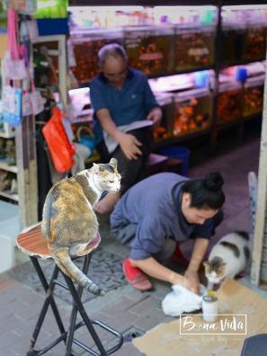 hongkong_0907