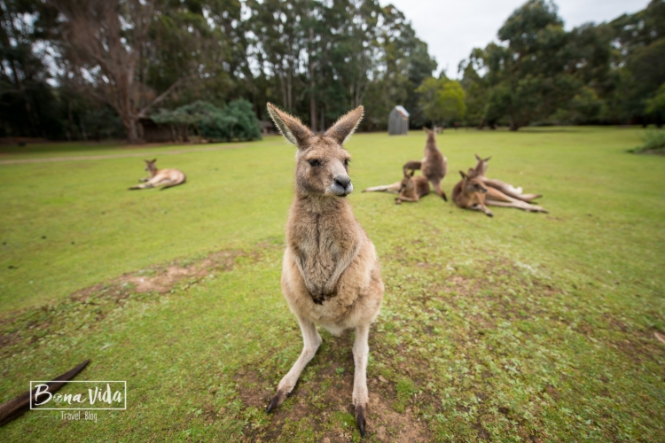 australia-tasmania-6
