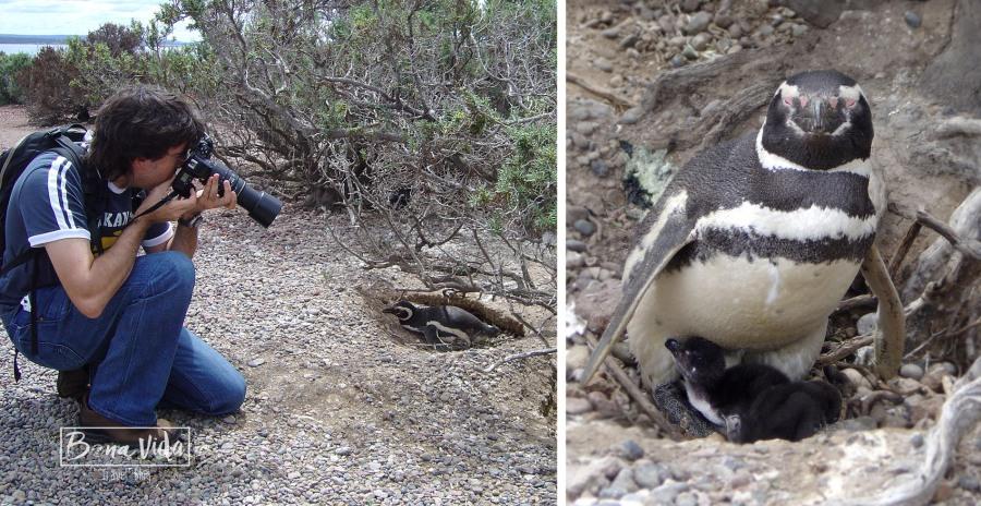 argentina-pinguins-mane-foto