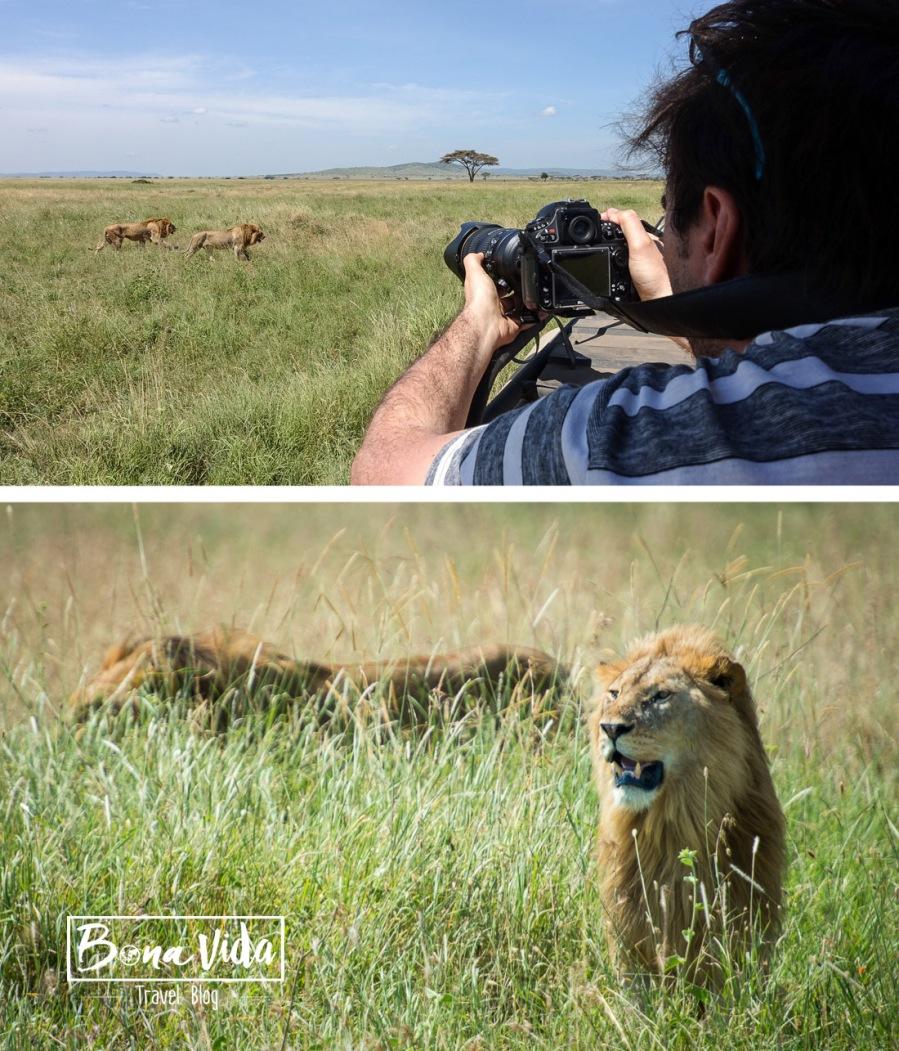 tanzania-safari-mane-fotograf