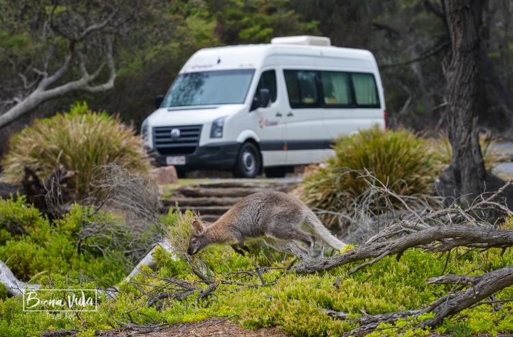 australia ruta tasmania-7