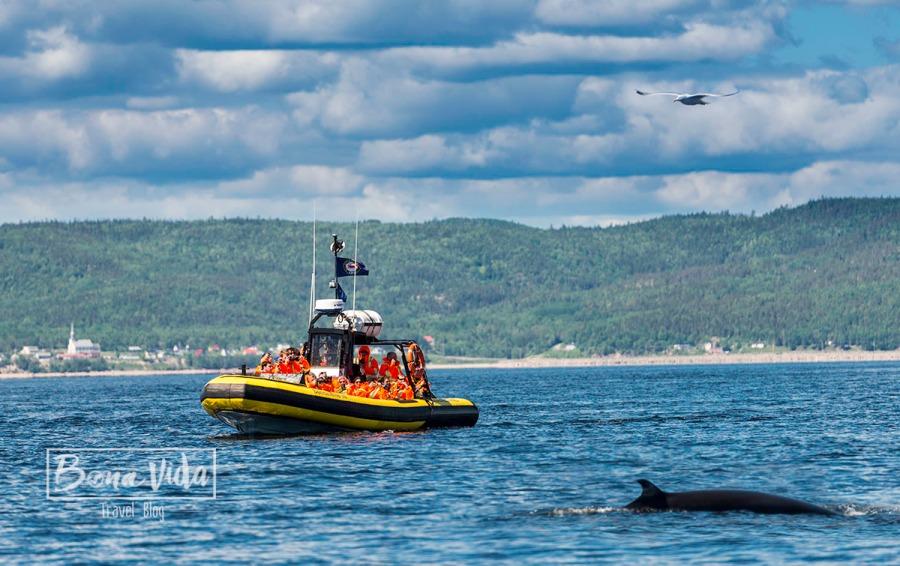 canada tadoussac balenes 01 ok