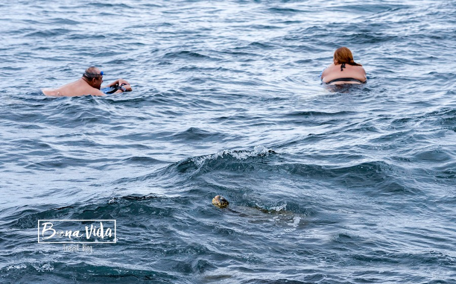 hawaii platges tortuga