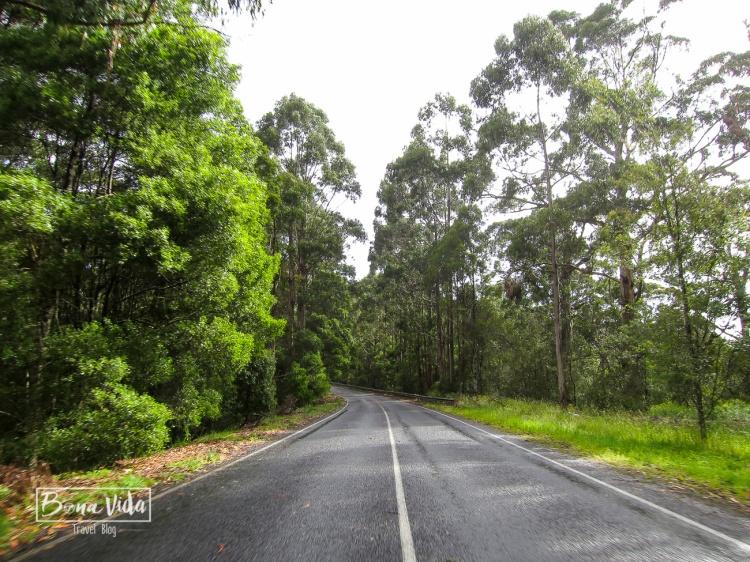 australia great ocean road-18