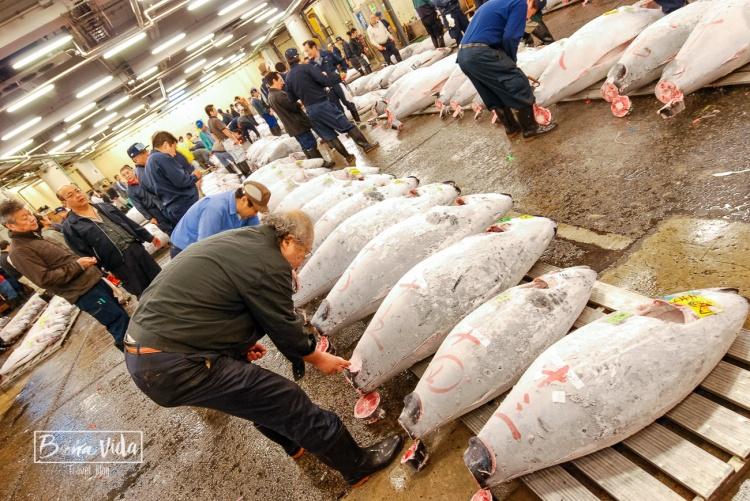 2a visita al mercat del peix de Tsukiji. Tokyo