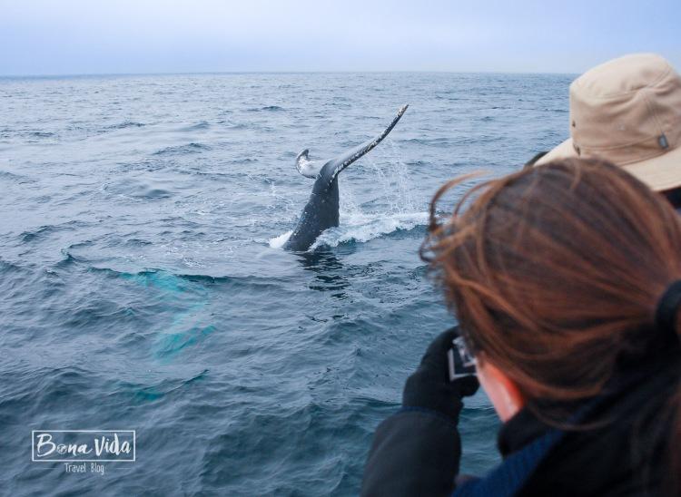 ruta usa costa oest monterey balena-1