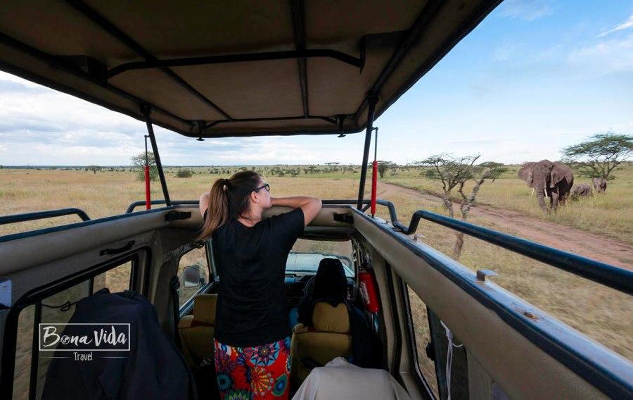 ganes de mon tanzania elefants cris
